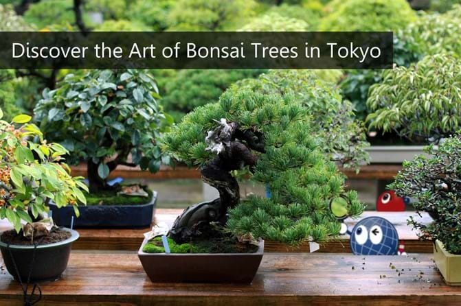 Bonsai - Everything You Need to Know About the Art of Bonsai